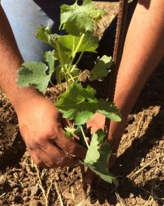 PW_planting