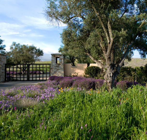 Estate Vineyard Entrance