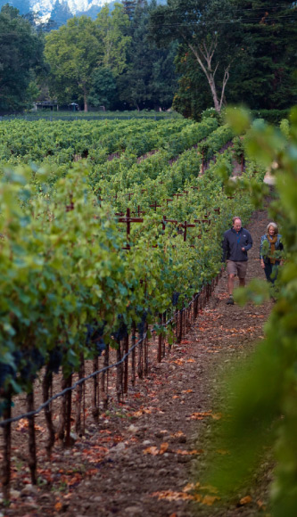 Nancy Andrus Duckhorn walking through vineyard